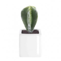 ASA Deko Kaktus