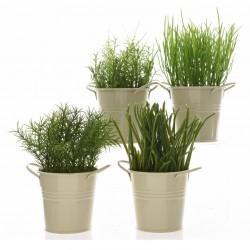 Pflanzen im Zinktopf Sortiert D6 H16cm