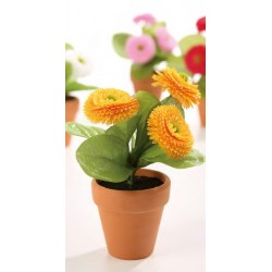Bellis im Tontopf 14cm orange
