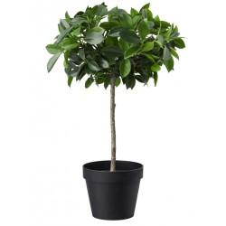 Topfpflanze künstlich Ficus grünlaubig Stamm 44cm