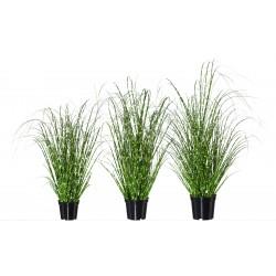 Kunstpflanze Miscanthus 3er-Set