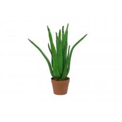 EUROPALMS Aloe-Vera-Pflanze, 63 cm