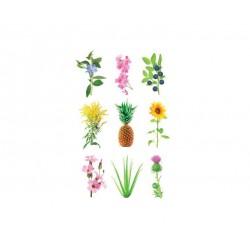 Click & Grow Experimentelle Pflanzenschoten